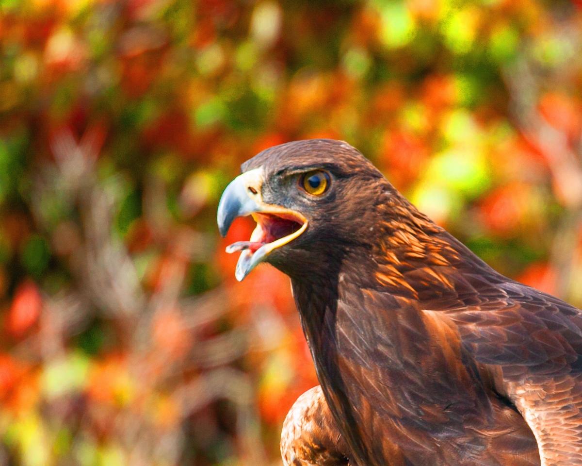 Grant Kreinberg Bird Photography | Solano Photography