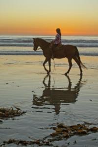 Morro Bay Horse - 2