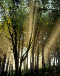 Sun Rays through the trees (1)